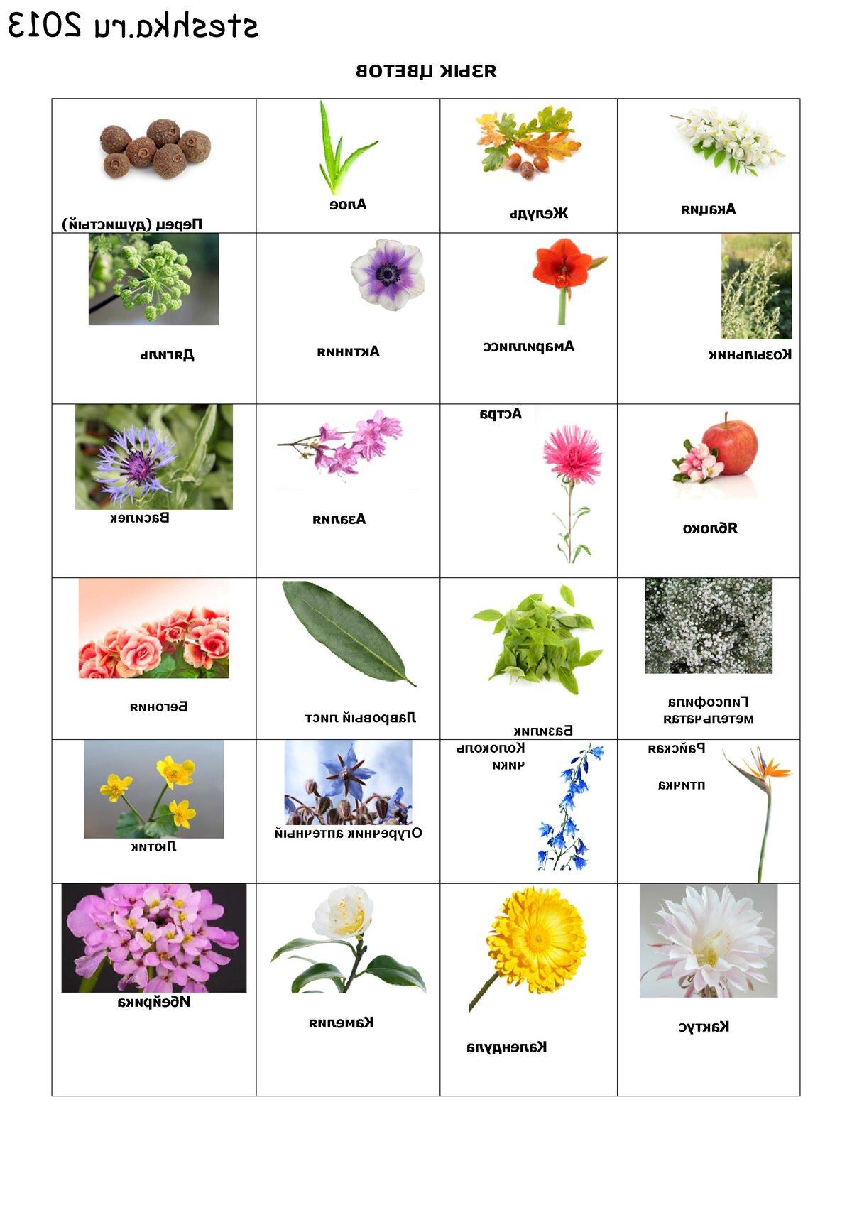названия садовых с картинками по алфавиту хаутен уже несколько