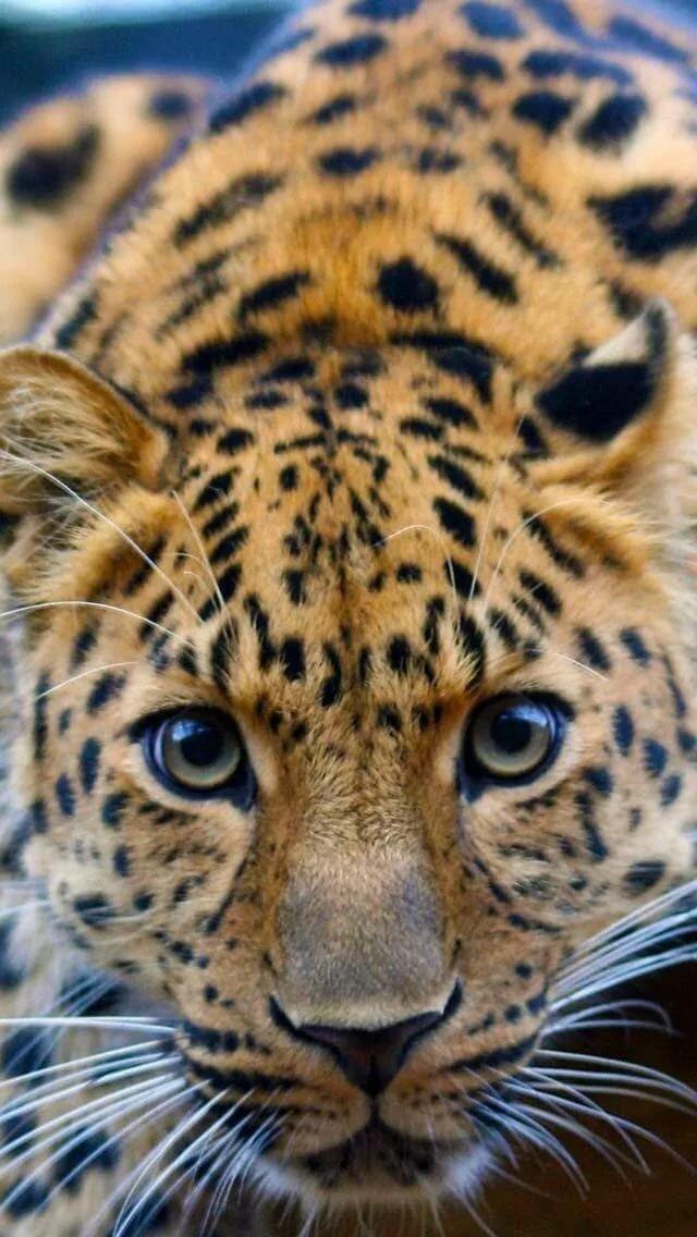 Днем, на андроид картинки на заставку животные