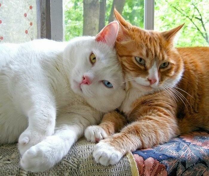 Красивые картинки для любимой жены с прикольными котиками, пожеланием