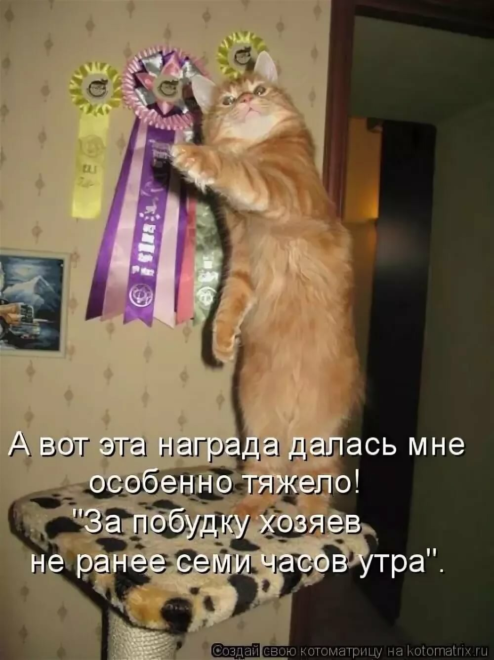 Открытка подруге, картинки с животными со смешными надписями