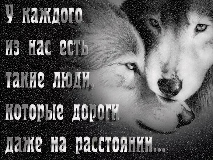 Картинки с волками и надписями про жизнь со смыслом новые, счастья удачи новом