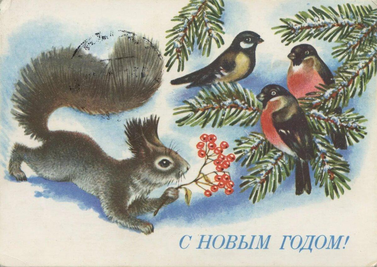 Открытка советская белка, растения