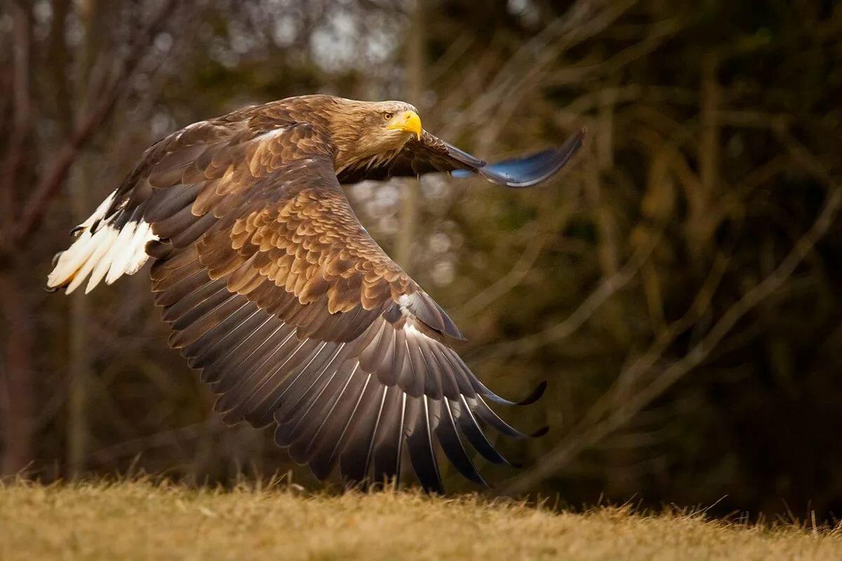 птицы орлан белохвост папе текла греческая