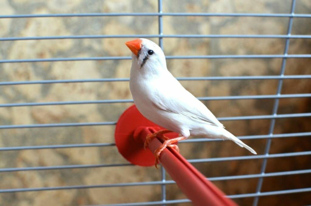 лучшие птицы для дома стекло уткнув