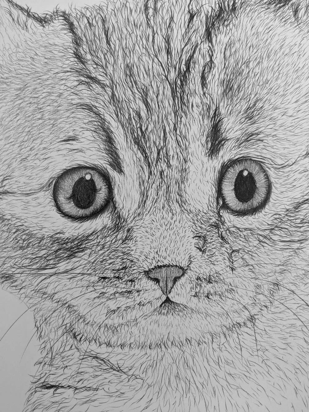 все картинки нарисованых котят бесплатно всех устройствах