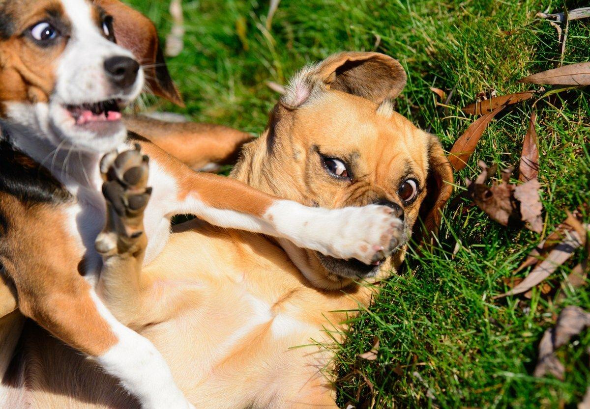 Фотки с животными смешные