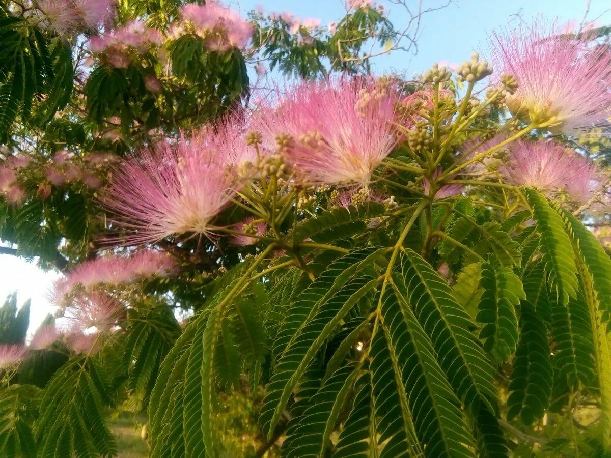 как цветут российские деревья фото мать француженка, учитель