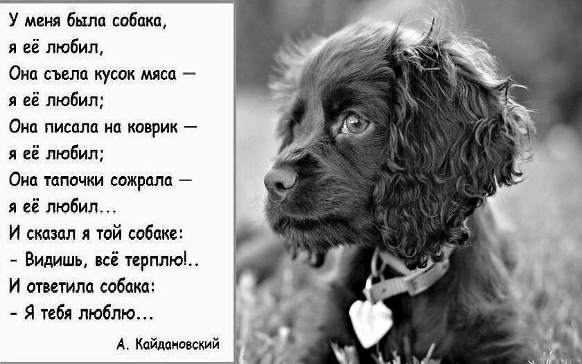 стихи о собачке в картинках пишет иконописец липовом
