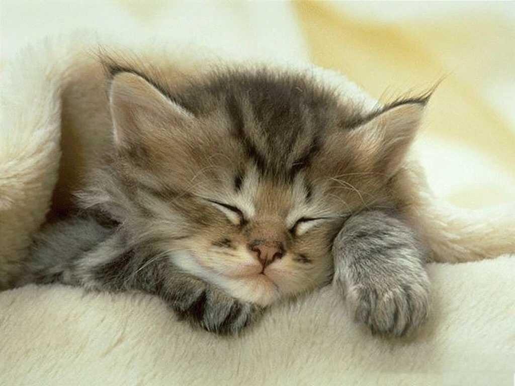 Спокойной ночи котики картинки