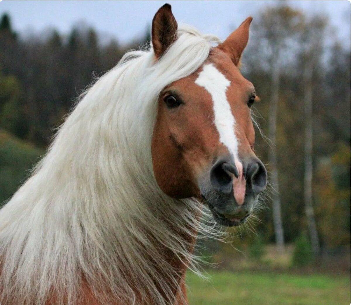 некрасивой картинки разных лошадей заменить водительские права
