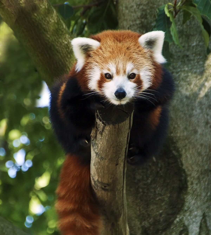 животные красной книги всего мира фото