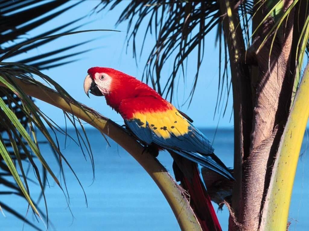 Днем, в картинках попугая