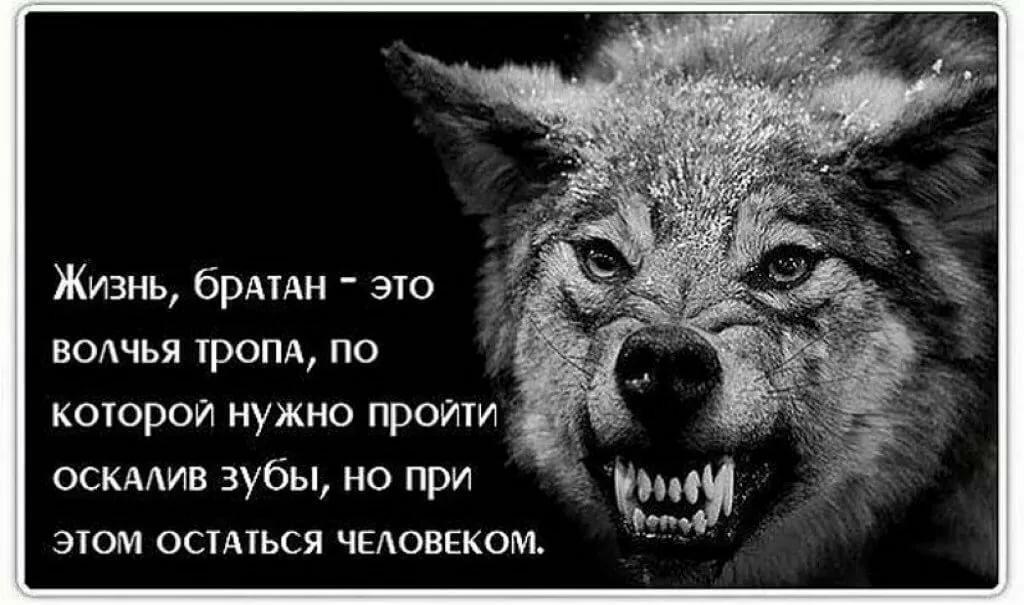 заниматься, картинки волков с статусами смыслом мужские виде матов