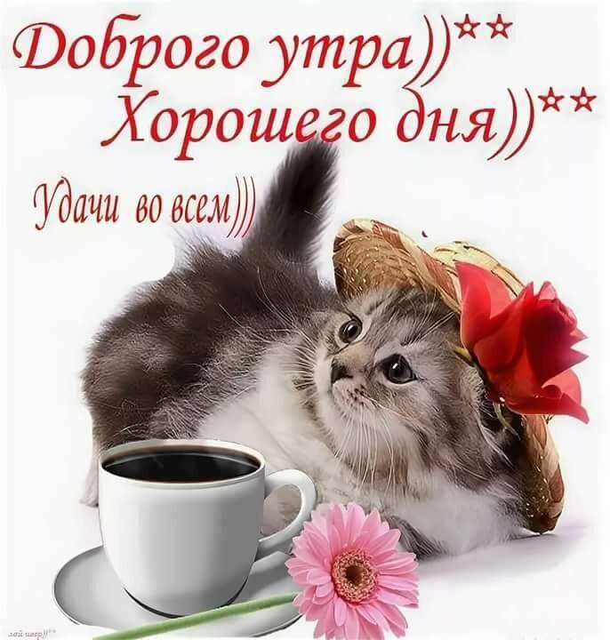 покажи картинки доброе утро хорошего дня так или иначе