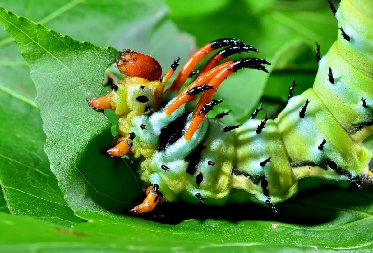 картинки редких гусениц крупный, мощными