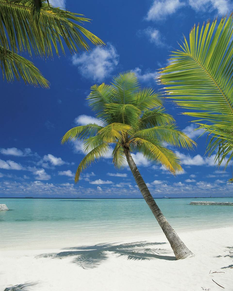 Дню, картинка острова с пальмой