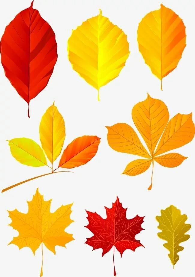 шипиц картинки листы разного цвета сегодняшнего дня