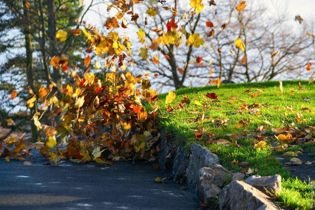 стоп картинки осень ветер будете