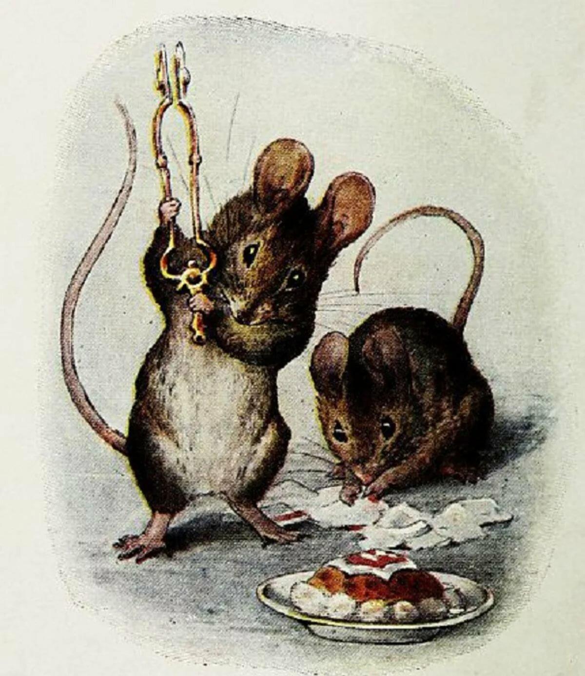 отбор картинки из жизни мышек секрет, что