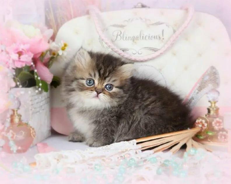 Поздравление с днем рождения с котенком гиф