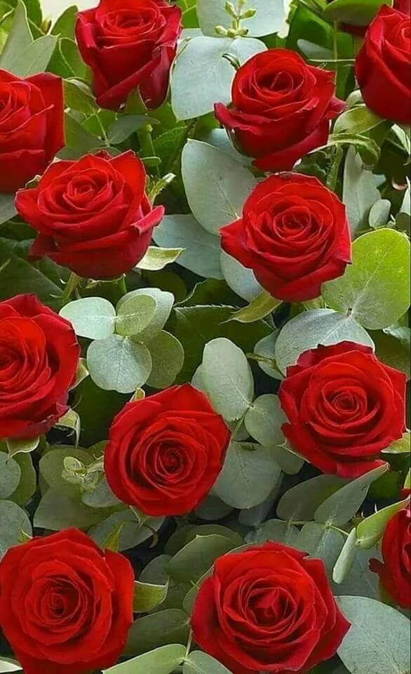 angelillo Floral Flowers, Rose, Beautiful roses