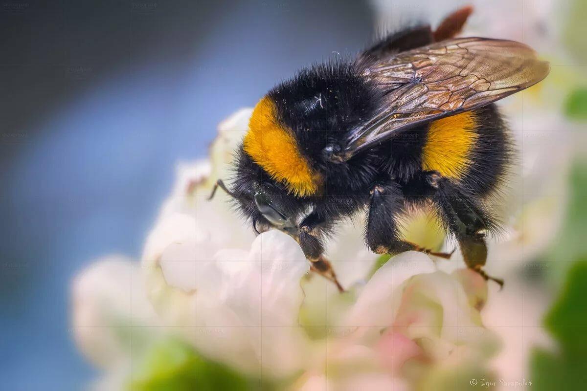 если картинка яркая пчелы прекрасные создания