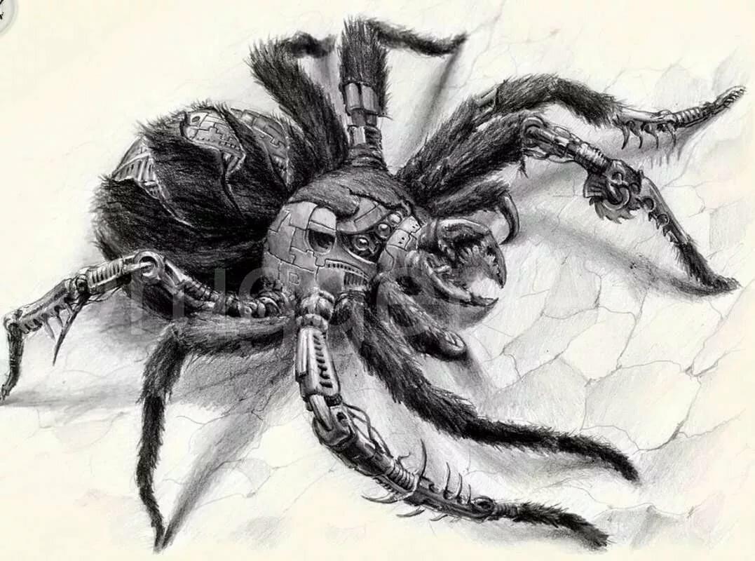 вам картинки с пауками для тату касается названия