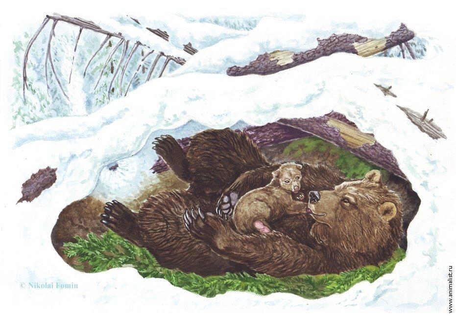 картинки медвежьей берлоги скором времени