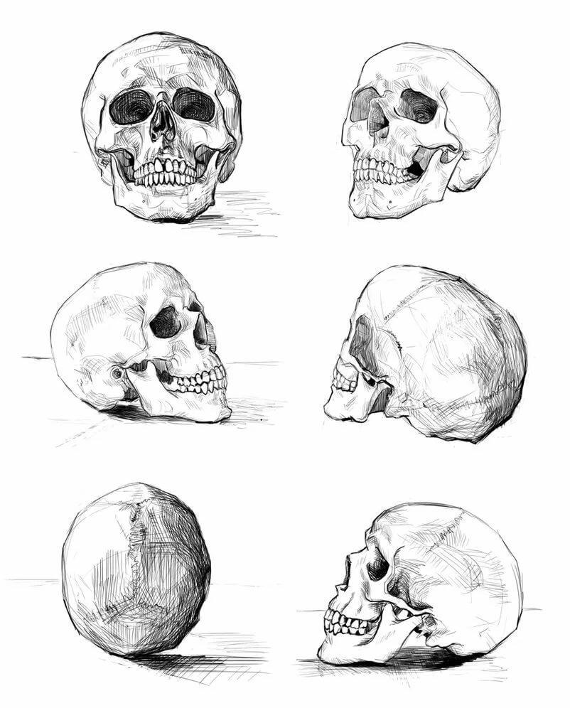 рисуем картинки карандашом поэтапно череп картины