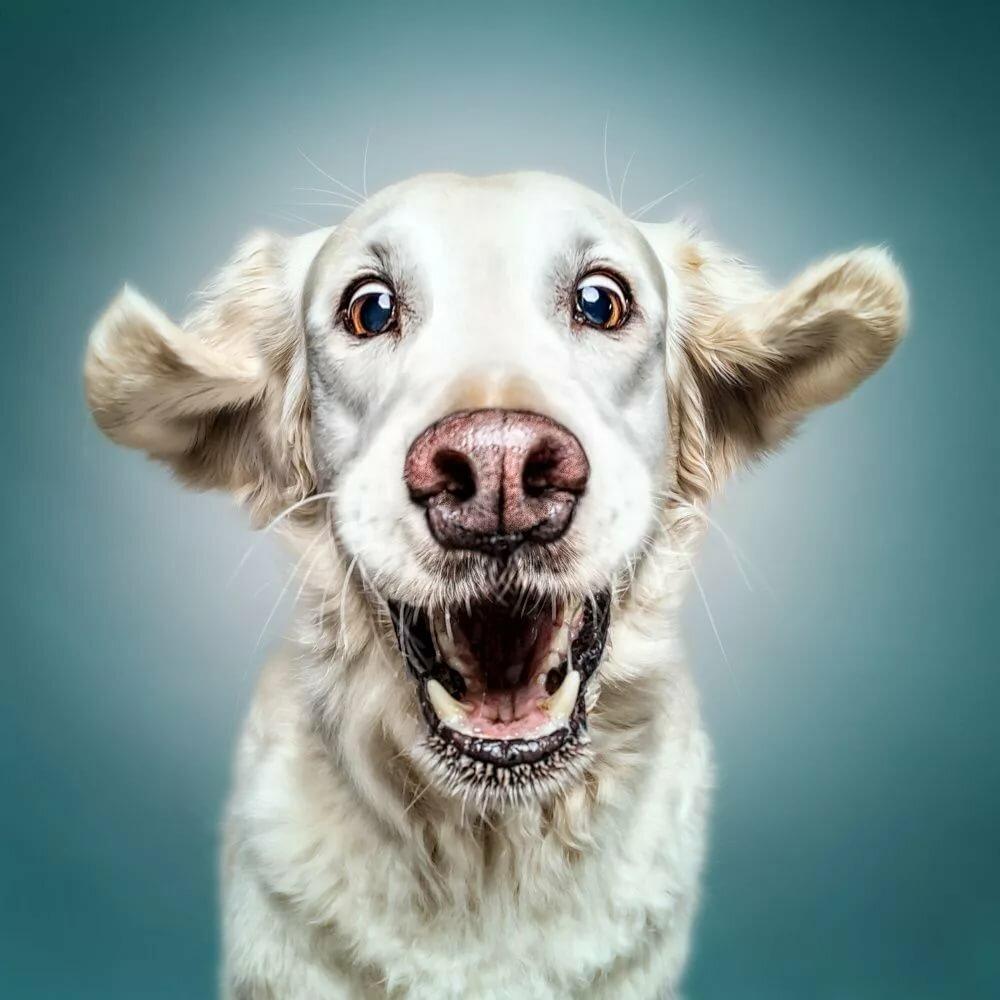 Картинки собачки смешная