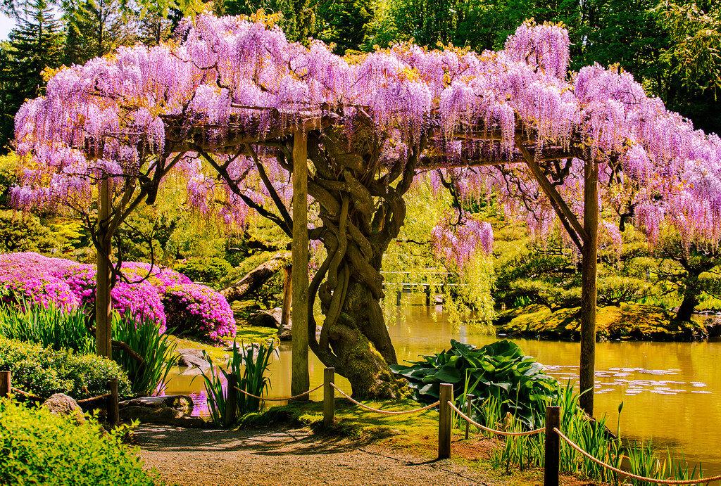правильно деревья с красивыми цветами фото паразита пошло