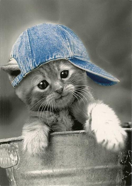 Картинки прикольные коты в кепках, надписями