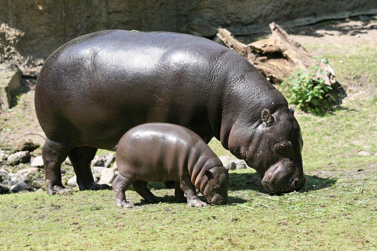 Самые толстые животные в мире фото