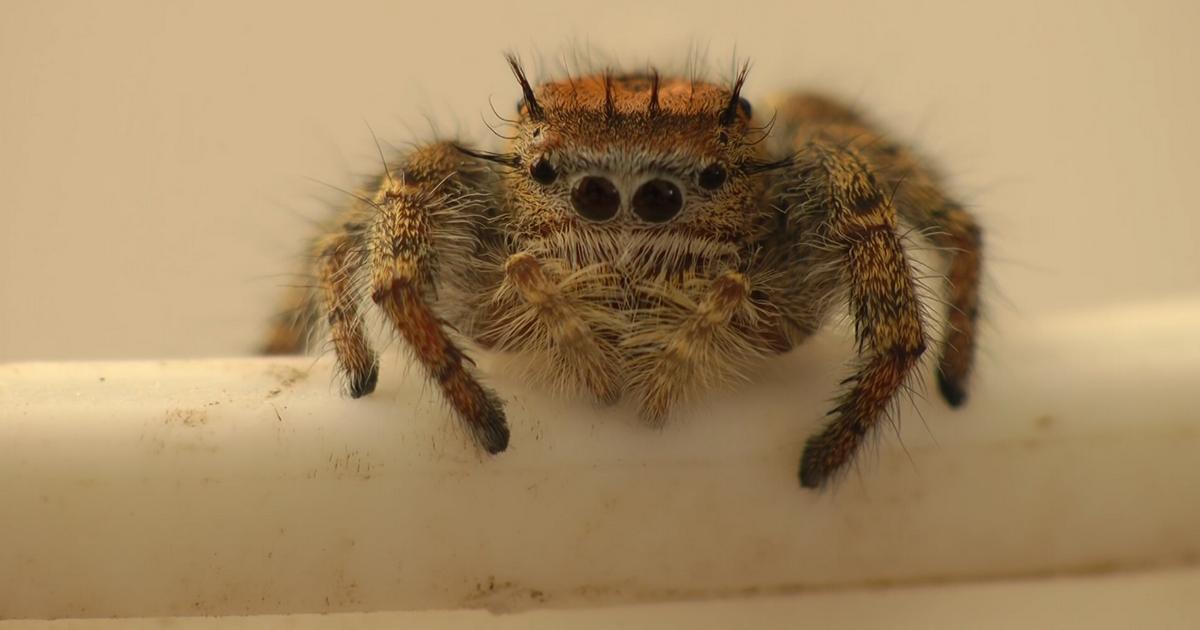 Прикольные гифки с пауками, рисовать самим открытки