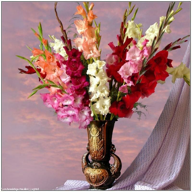 Букет цветов из гладиолусов фото, оптовая фирмы