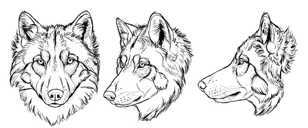 Голова волка рисунки карандашом