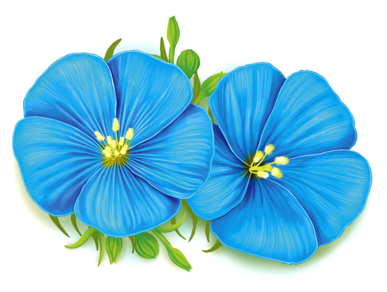 Картинки для детей синие цветы