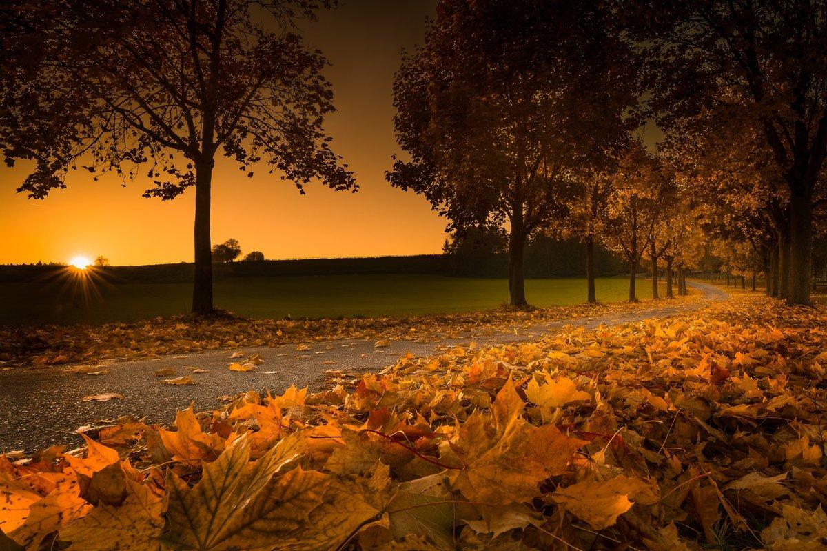 Осенняя аллея , в Ð»ÑƒÑ‡Ð°Ñ Ð·Ð°ÐºÐ°Ñ'а