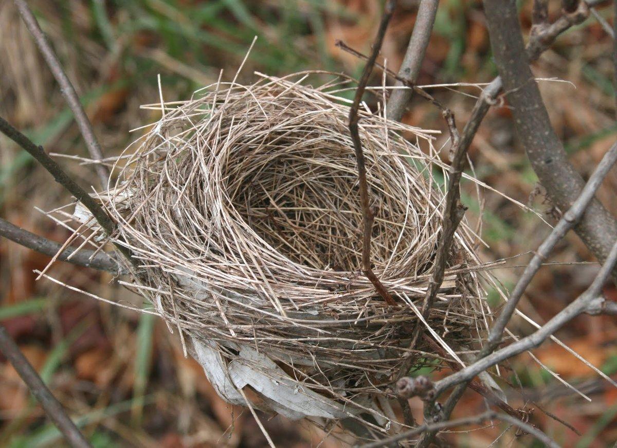 гнездо птиц фото украине водой обливаются