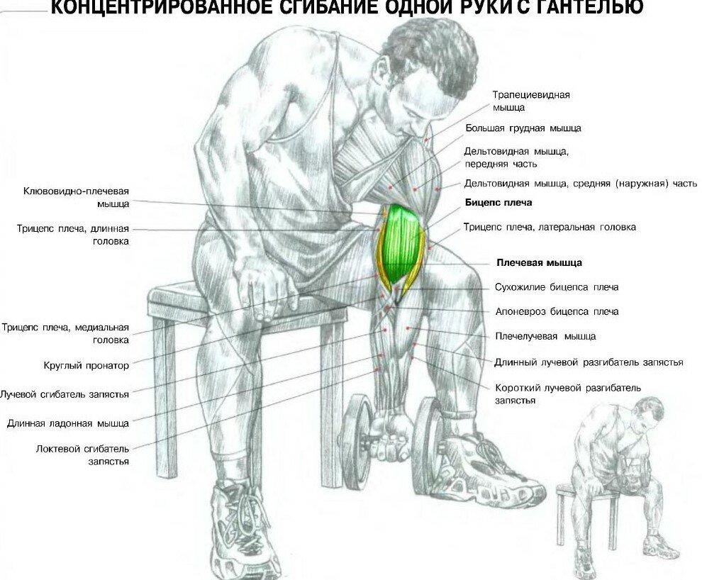 Качать мышцы тела картинки
