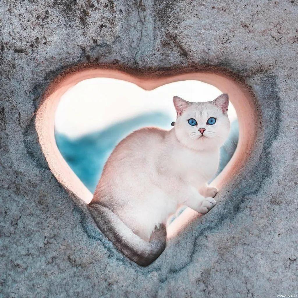 Открытки коты и сердечки