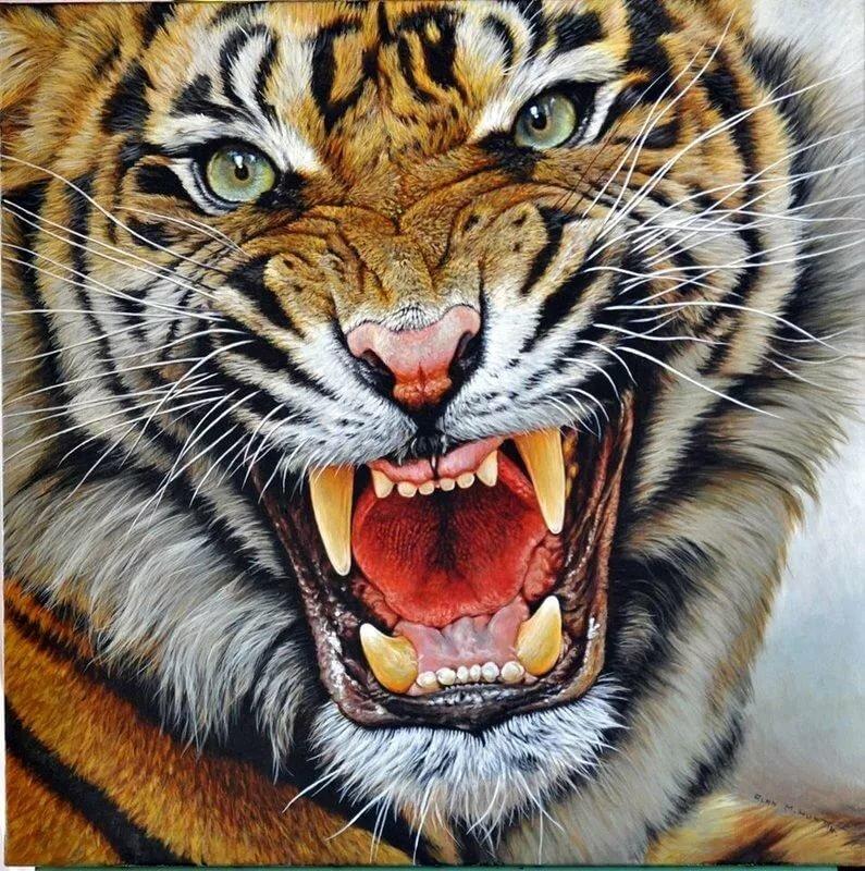 Тигр в оскале картинки