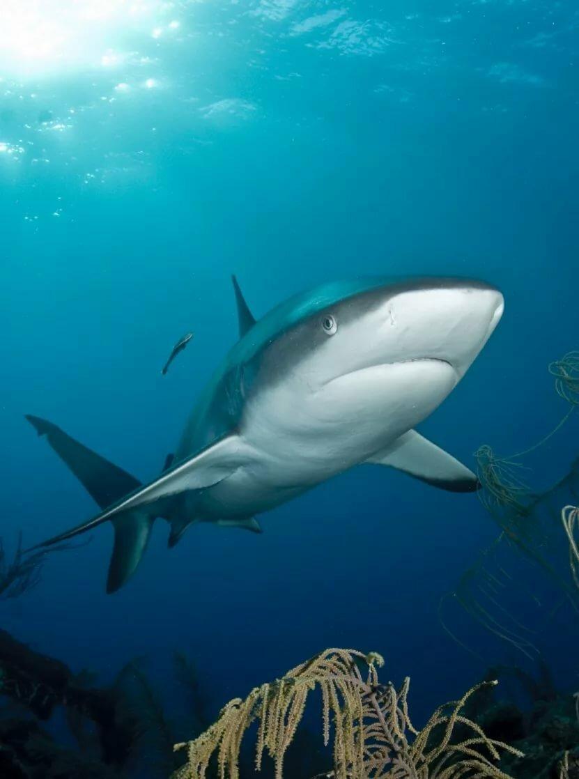 акулы смотреть фото приговор втайне