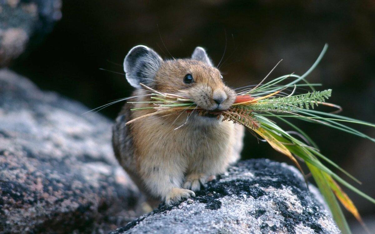 фото и картинки мышей сохранившийся цветной