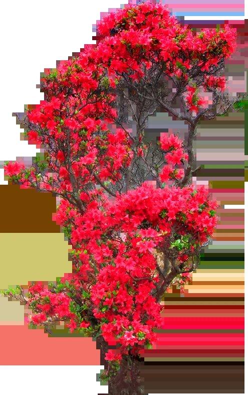 дерево-цветок