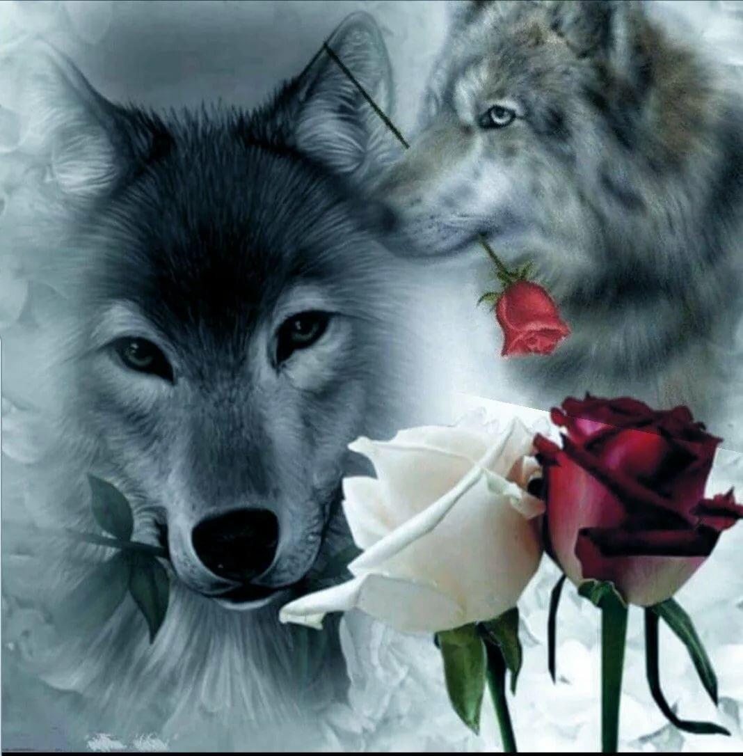 Поздравления днем, волк открытка