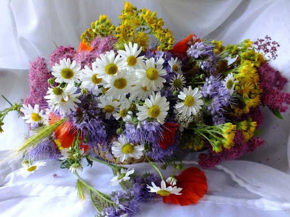 Анимашки, картинки полевые цветы с днем рождения