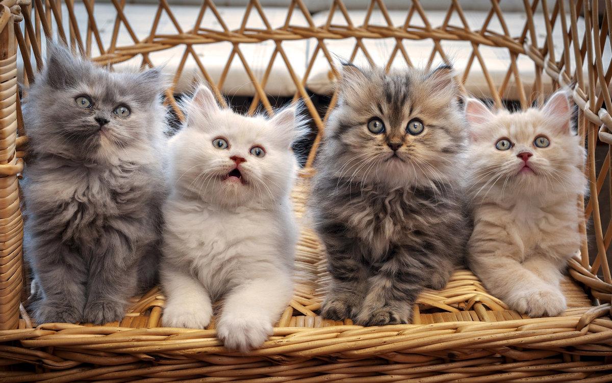Открытку, картинки с котятами фото