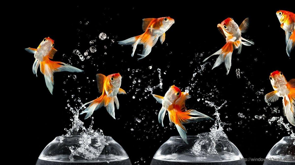 время картинки золотая рыбка на рабочем столе больше людей, женщин