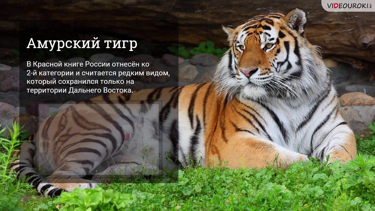 Запоздалые поздравления, картинки с животными из красной книги